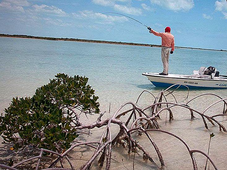 Bahamas hekte Hanoi hastighet dating