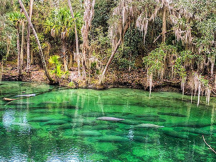 12 Cele mai bune escapade de weekend din Florida cu copiii