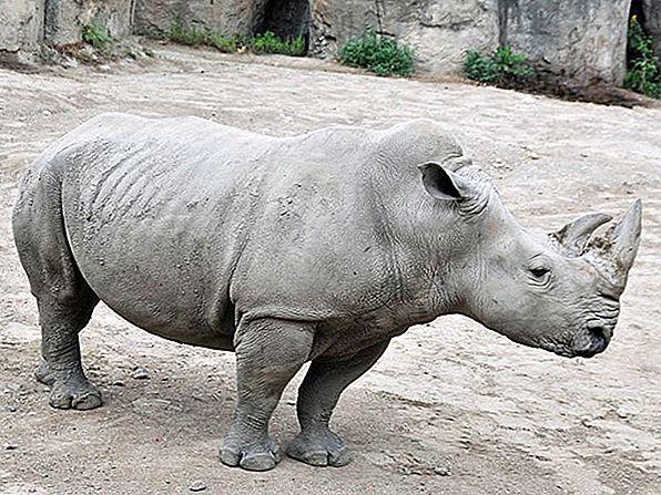 アメリカのベスト動物園10