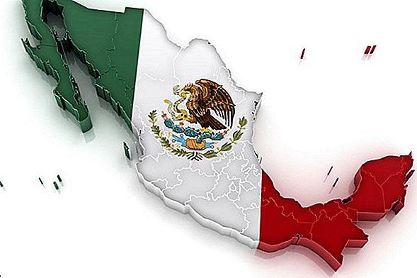 멕시코 바하에서 바다 사자와 함께 스노클링을 즐기세요