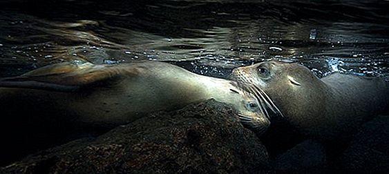 Приключение Подводное плавание с морскими львами в Баха, Мексика