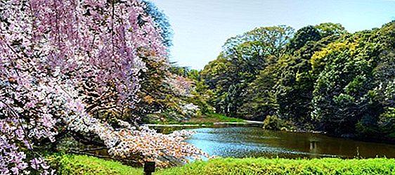 9 Cele mai bune locuri din Japonia pentru a vedea cireșe