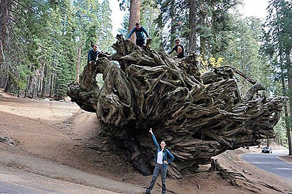 Lucruri incredibile de făcut în Parcul Național Yosemite