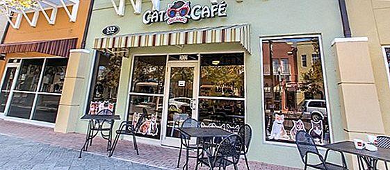 Floridas Orlando Cat Cafe ist perfekt für ein Kaffee-Date