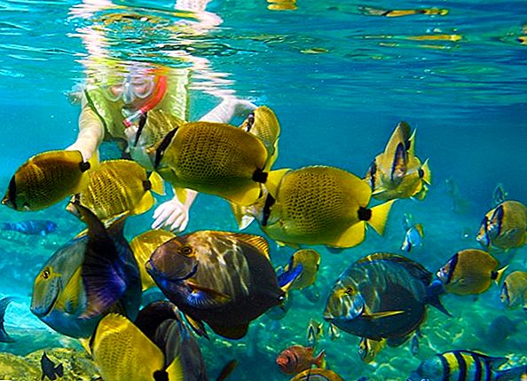 8 Cele mai bune locuri din Snorkel în Mexic