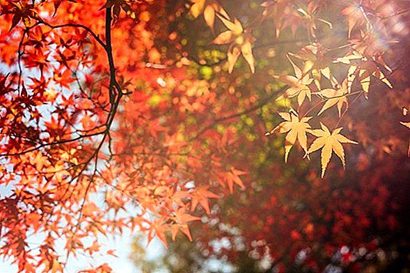 가을 색을 볼 수있는 가장 낭만적 인 여행지 10 곳
