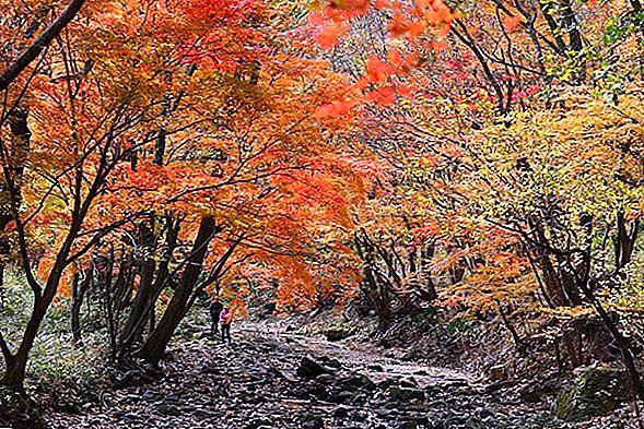가을 색이 가장 아름다운 17 곳의 미국