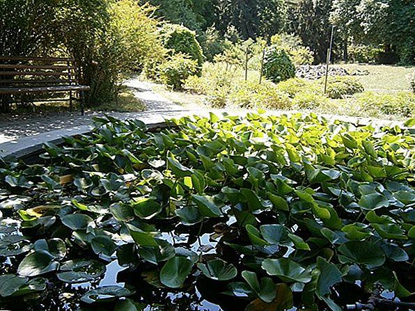 8 Cele mai bune grădini botanice din Texas pentru a vizita această primăvară