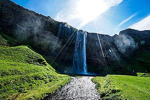 아이슬란드 말-이 아름다운 품종에 대해 알아야 할 모든 것