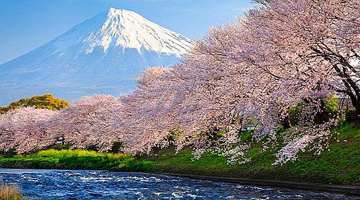 Blühen und schön! Wo kann man Kirschblüten in Japan sehen?