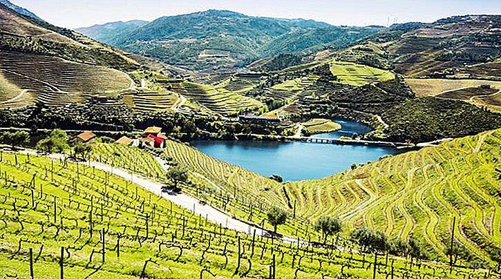 Wein, Wellness und Wunder! Warum sollten Sie als nächstes ins Douro-Tal gehen?