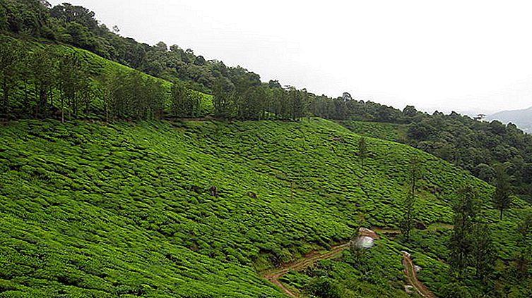 Vythiri-Rainforest Hideaway