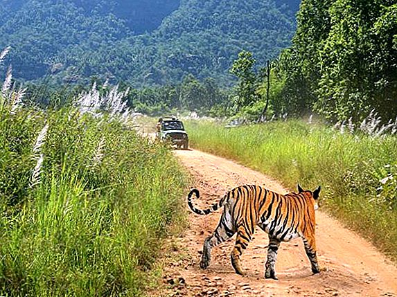 Поездка в национальный парк Бандхавгарх