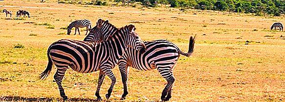 Kenia - Die wundersame Tierwelt erleben