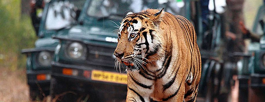 Madhya Pradesh: The Wildlife Haven