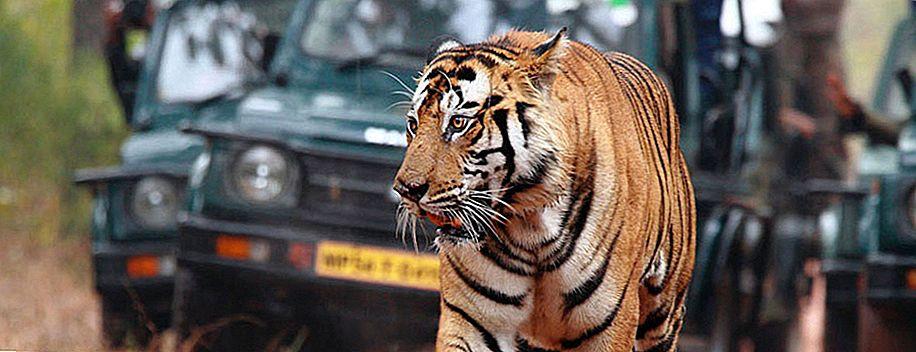Мадхья-Прадеш: Приют живой природы
