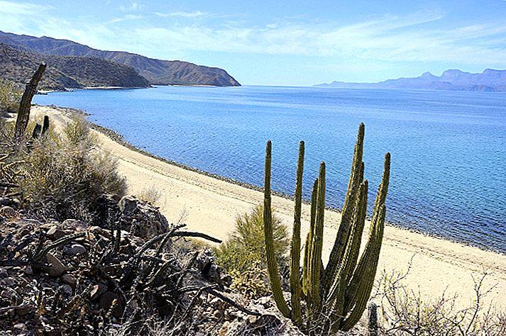 Komme tilbake til naturen i Baja California Sur