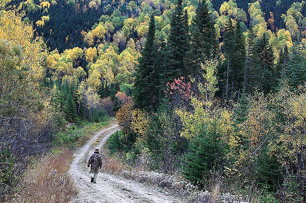ワイルド・ケベック:カナダの裏庭で自然に遭遇