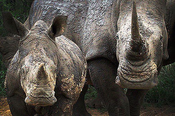 Safari din Africa de Sud pentru prima dată: 8 sfaturi