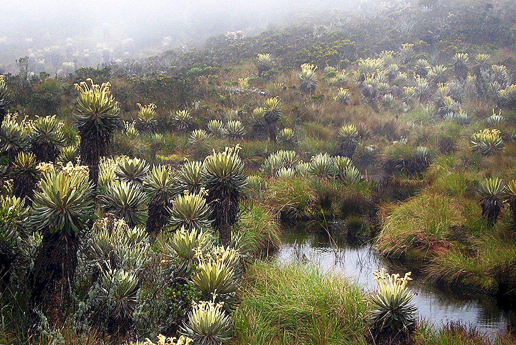 Pristine páramos: การเดินป่า 5 วันในสนามหลังบ้านของBogotá