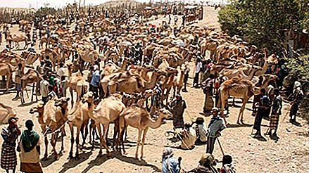 Bati husdyrmarkedet