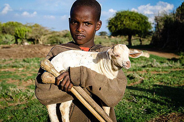 อาศัยอยู่กับคน Maasai ของเคนยา