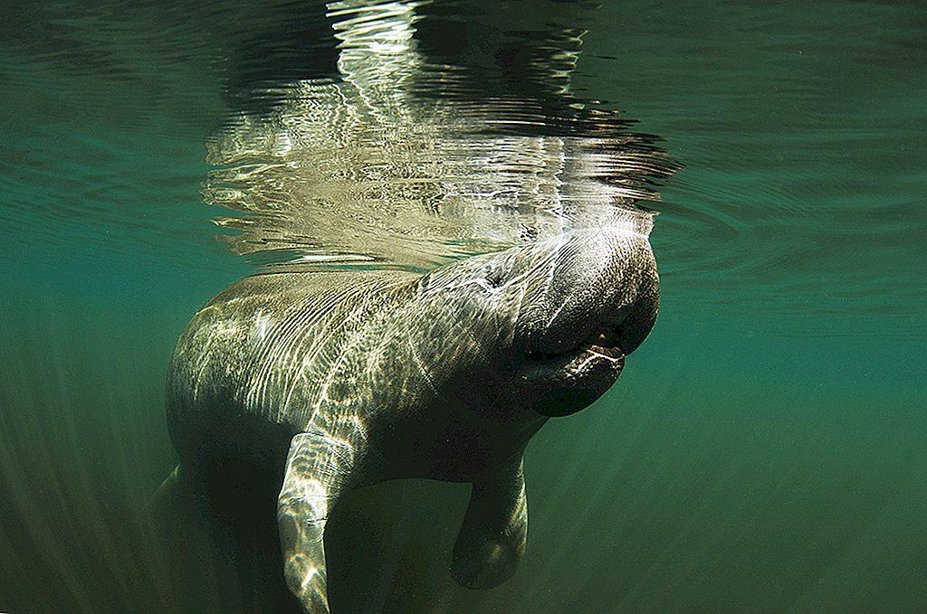 ธรรมชาติที่น่าทึ่งและสัตว์ป่าบริเวณฟอร์ทไมเยอร์สแอนด์ซานิเบล