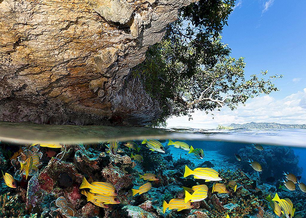 Raja Ampat: คู่มือฉบับย่อเพื่อไปเยือนหมู่เกาะปาปัวอันงดงาม