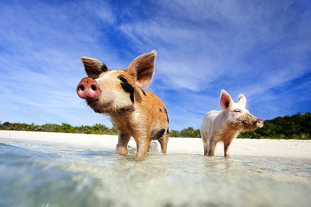 Dyrøyene: syv steder hvor skapninger hersker