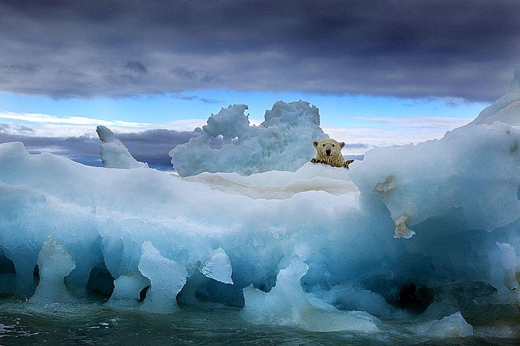 ที่จะเห็นหมีขั้วโลกอยู่ในป่า