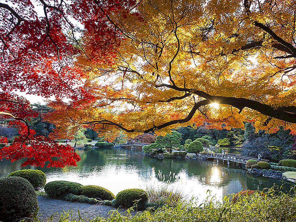 Tokyo în toamnă: cele mai bune lucruri de văzut și de făcut - Lonely Planet