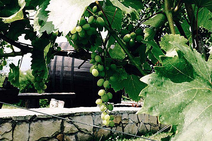 การชิมไวน์ในมอลโดวา: การเดินทางไปยังองุ่นที่ไม่รู้จัก