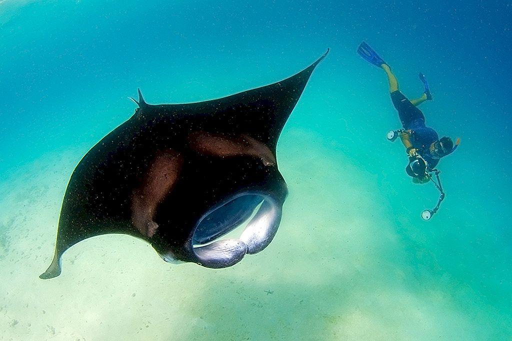 Faceți cunoștință cu un călător: Guy Stevens, biolog marin