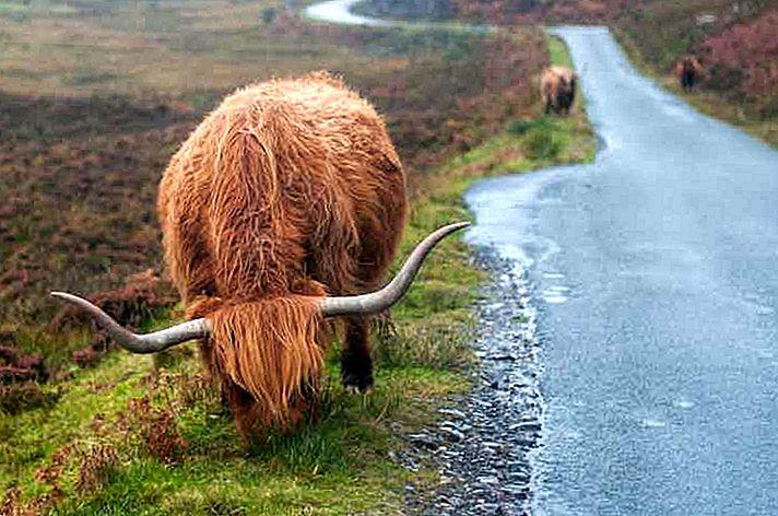 Skottlands ville øyer: en naturkurset tur i sørlige sørebreder