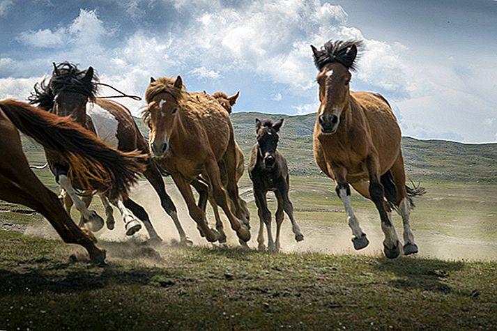 Mongolia a pierdut secrete în imagini: călăreții kazahi
