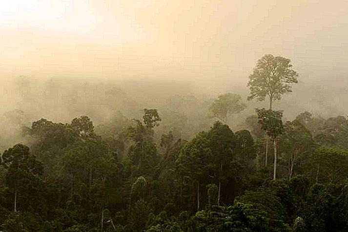 Utenfor banket spor i Borneo