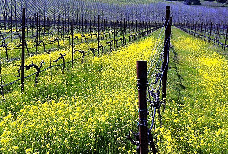 Utforske den stille siden av California Wine Country