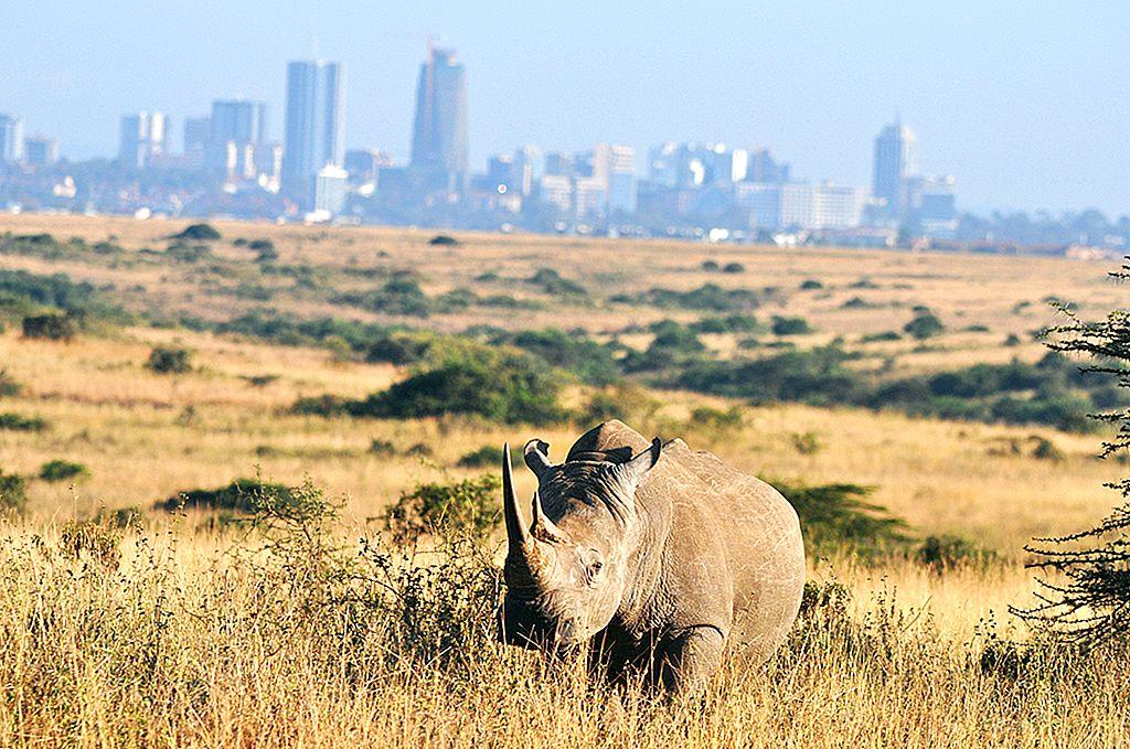 Hvordan leve som en lokal i Nairobi, Kenya - Lonely Planet