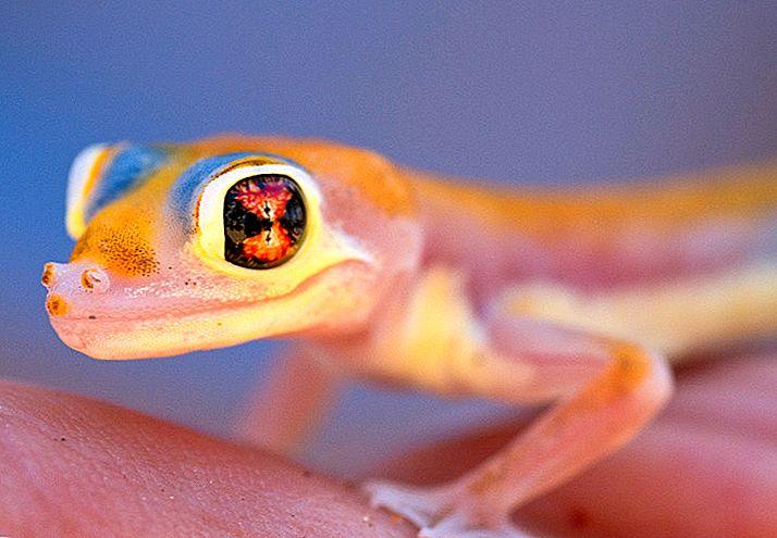 あなたが一度も知らなかったように人生:ナミビアの最もエキゾチックな生き物