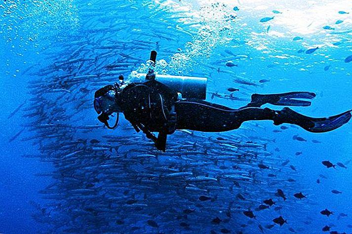 ดำน้ำ Sipadan: กระแสน้ำแรงกำแพงสูงชันและชีวิตทางทะเลมากมาย