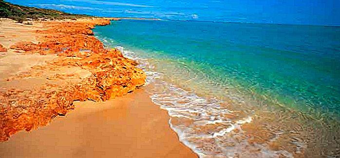 ウエスタンオーストラリア州でワイルドワイルド:西オーストラリア州で目を見張る動物遭遇