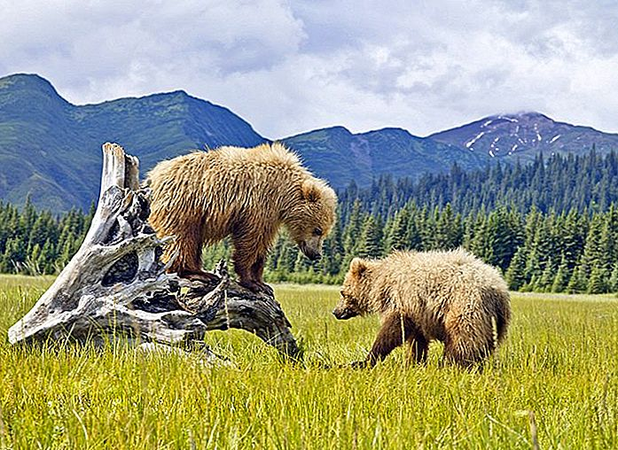 15 Top-Rated Touristenattraktionen in Alaska