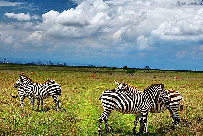 11 Top-Rated Sehenswürdigkeiten in Nairobi
