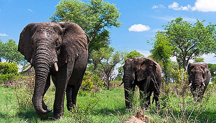 12 attrazioni turistiche top-rated in Sud Africa