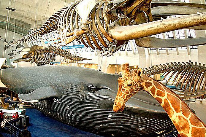 8 Dinge zu sehen und zu tun in Londons Natural History Museum