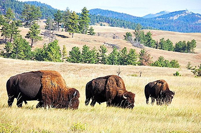9 Topprangerte turistattraksjoner i Custer, South Dakota