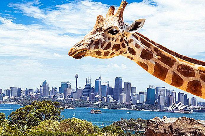 ★ 18 Atracții turistice de top din Sydney ★ - Atractii Turistice
