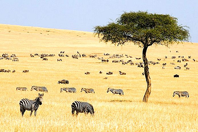 14 Top-Rated Touristenattraktionen in Kenia