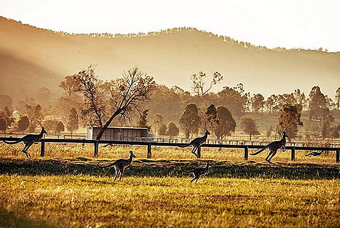 Erkundung der Top-Attraktionen des Hunter Valley, Australien