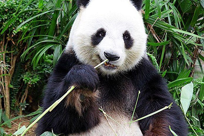 10 migliori attrazioni turistiche a Chengdu e Easy Day Trips